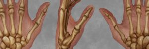 Hand Anatomy - Fleshed Out by ConceptCookie
