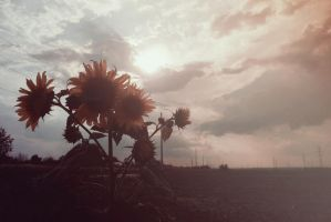 Another Sunflower by LookingTheHorizon