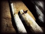 Butterfly On Driftwood by ConnieLynnArt