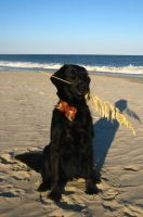 Diva and the Sea Oats 3 by Rikkanna