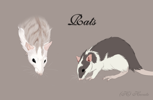Rats by hecatehell