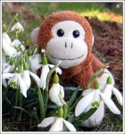 friedel loves spring by Lautumschrift
