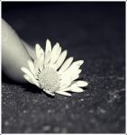 .Little.Touch. by c-time