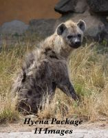 hyena package by bookscorpion