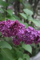view to lilac 3 by ingeline-art