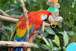 PARROT by HumbleLuv