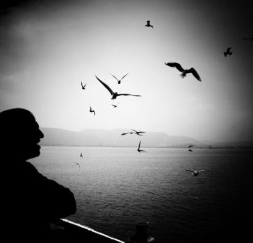 Seagull go and fly. by cellists