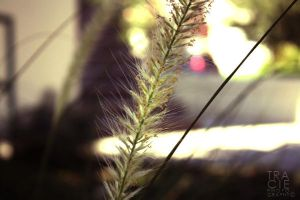Details of a Cattail by TREECEE