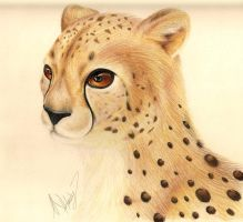 Cheetah by SonARTic