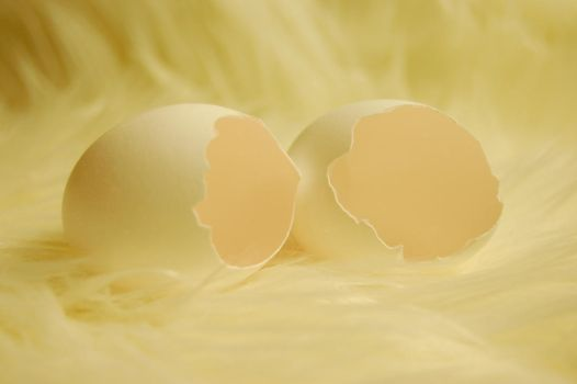 eggs by GestiefelteMieze