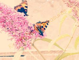 The Socializing Butterflies by SweetlingsDream