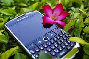 Blackberry in natural mode by stvzz