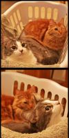 Cat basket Love by TeaPhotography