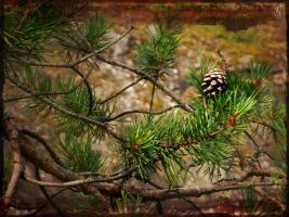 Pinecone by SineLuce