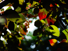 Multicolored Leaves -2- by IoannisCleary