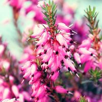 .:preety in pink:. by BlueColoursOfNature