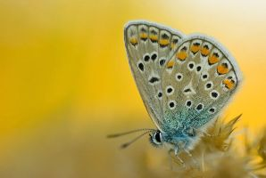 butterfly by decmeister