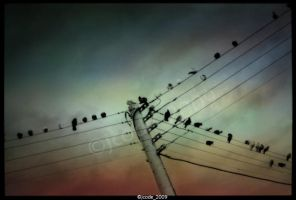 the birds' stave by jcode