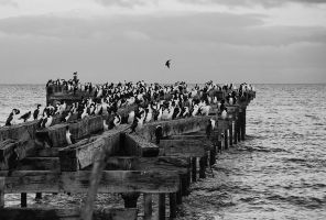 Muelle I by ADeliriumTrigger