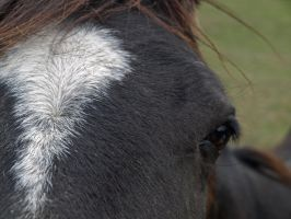 The horses eye 1 by gee231205