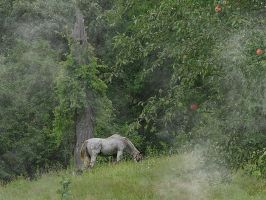 Horse and Hillside by VisionsSeen