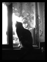 Kitty in the Window by foreverlong926