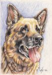 Jazz the German shepherd by Kattvalk