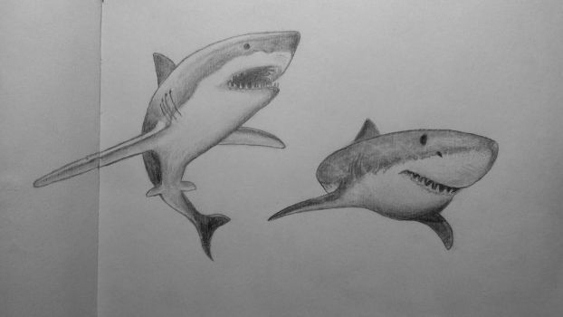 Shark study by Dimitris24sta23