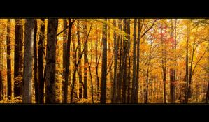 Great Smoky Autumn by mewantsbekungfoo