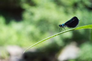 Dragonfly by goonerscalise
