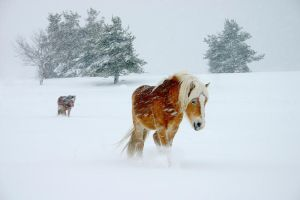 Interminable hiver by gwichin