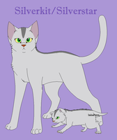 Silverkit/Silverstar of Ancient SkyClan by animenerd26