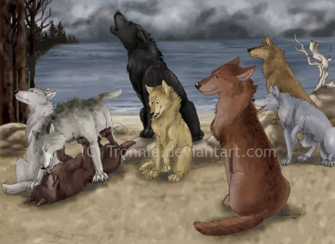 Quileute Wolves by tronnie