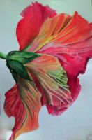 Watercolor Hibiscus by Viarae
