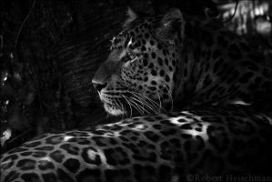 Black and White Week #1: Shaded by robbobert