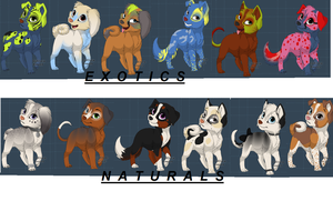 Puppy Adopts 2 - OTA - 8/12 OPEN by chole785