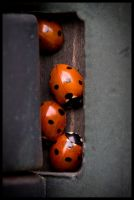 Ladybird Hide 'n'seek by grimleyfiendish