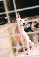 Doggies Animal Shelter 1 by pookiefx