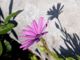 Flower with shade 2 by archaeopteryx-stocks