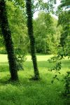 Nature background 20 by elanordh-stock