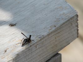 Wasp on the Railing by Toderico