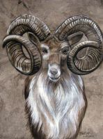 Big Horn Ram by HouseofChabrier