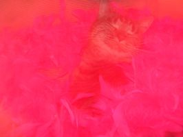 Kitty Face in teh Pinkness by electricsorbet