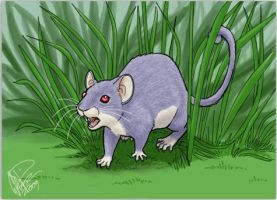 drawingday rattata by twapa