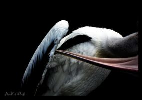 Pelican by A-Ph1