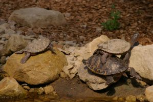 Turtle IV by expression-stock