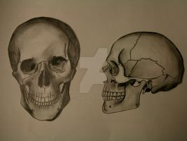 Skeleton Study - Skull by XGambit3567