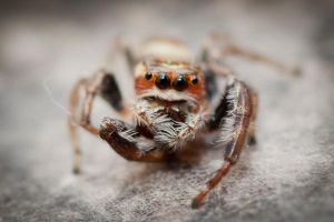 Jumpy Spider-1 by Colin-LOCP