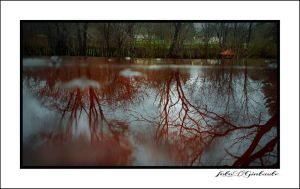 Reflection in the water....7.... by gintautegitte69