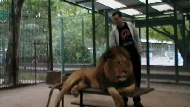 Chilling with lion again... by Charlesdeleroy